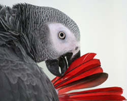 Parrot Mental Stimulation