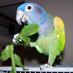 Parrot Food Safety