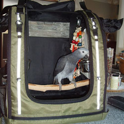 Parrot Travel Safety