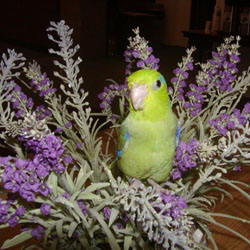 Safe Plants for Parrots