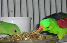 Sprouts are good for Parrots
