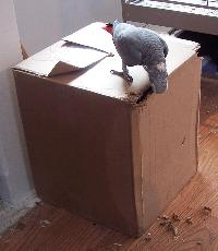 Recycled Box Used as Parrot Foraging Area