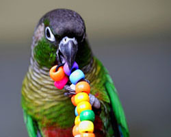 Choosing Toys for Your Bird