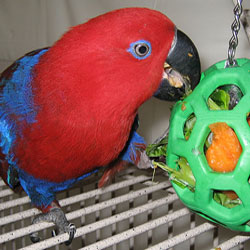 parrot foraging strategy